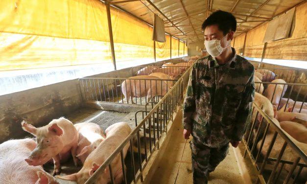 Gripe Suína de 2009: As Semelhanças com a Pandemia Covid-19